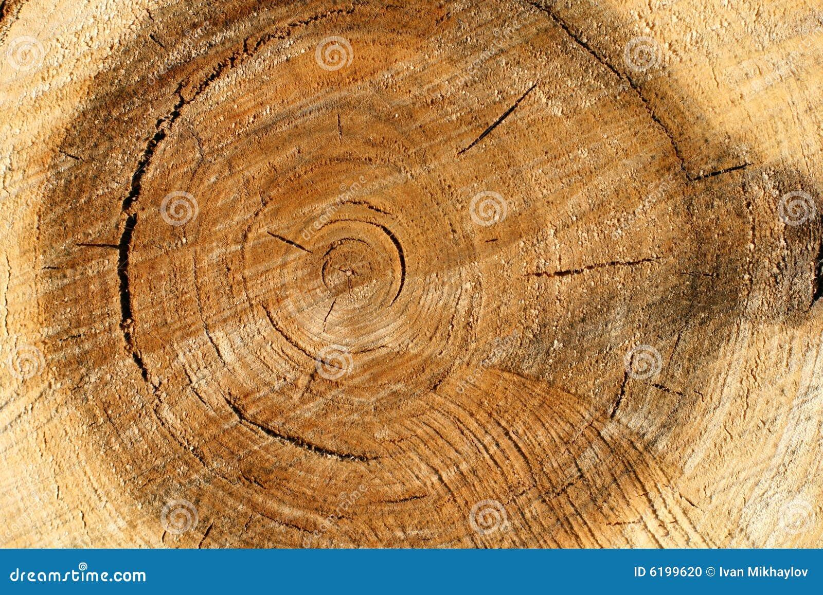 Pile Wood Stock Photo Image 6199620