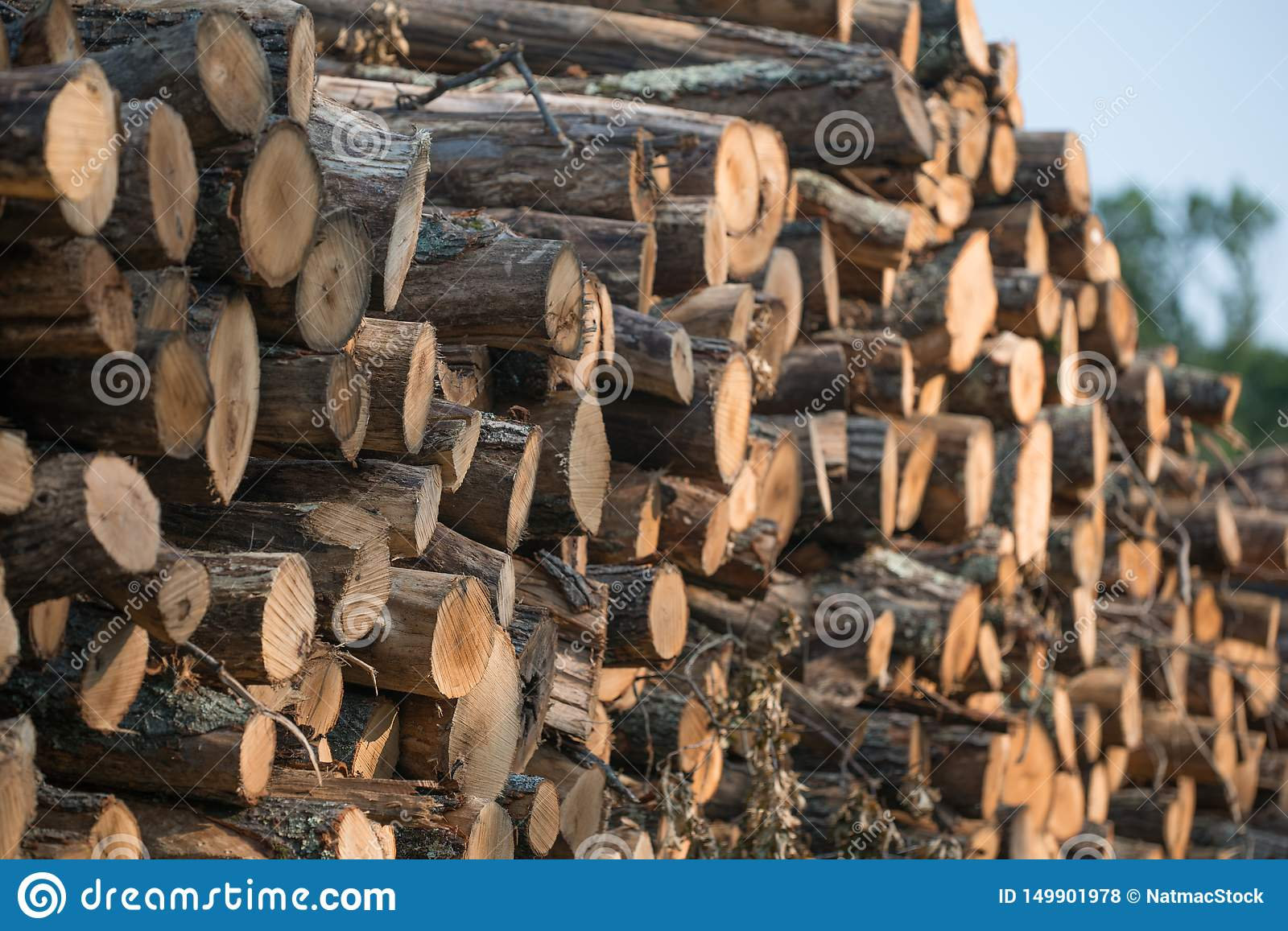 Piles of stacked logged trees from Governor Knowles State Forest in Northern Wisconsin - DNR has working forests that are harveste