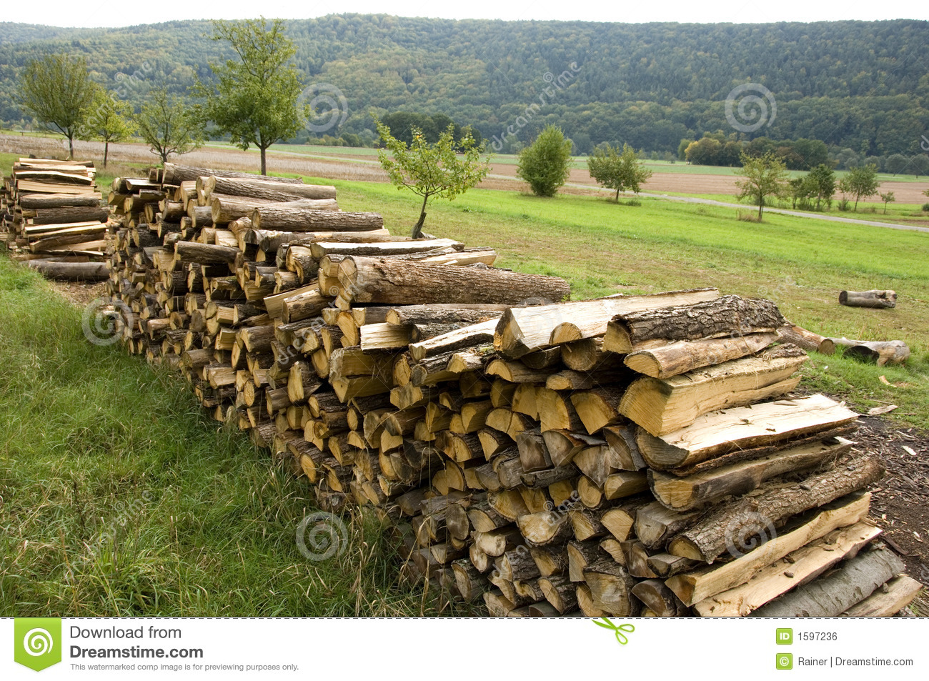 Piles of wood stock photo image forest stack work