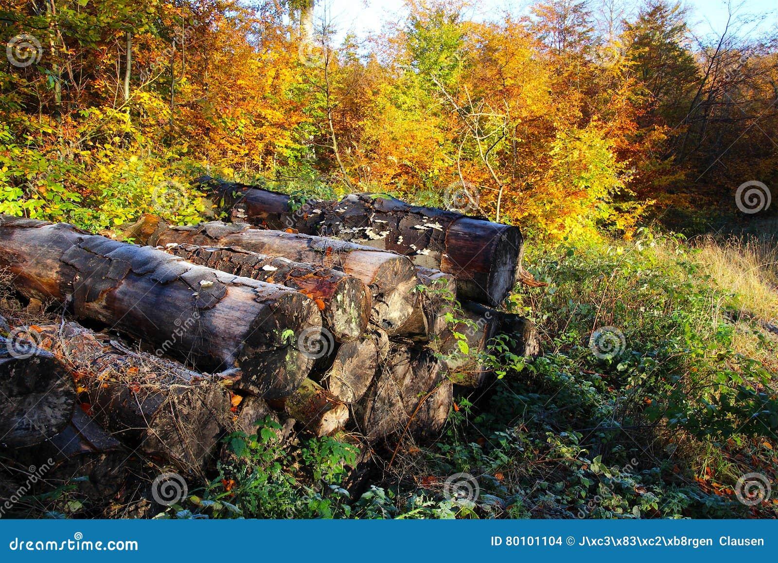 Pilha da lenha de cores festivas do outono