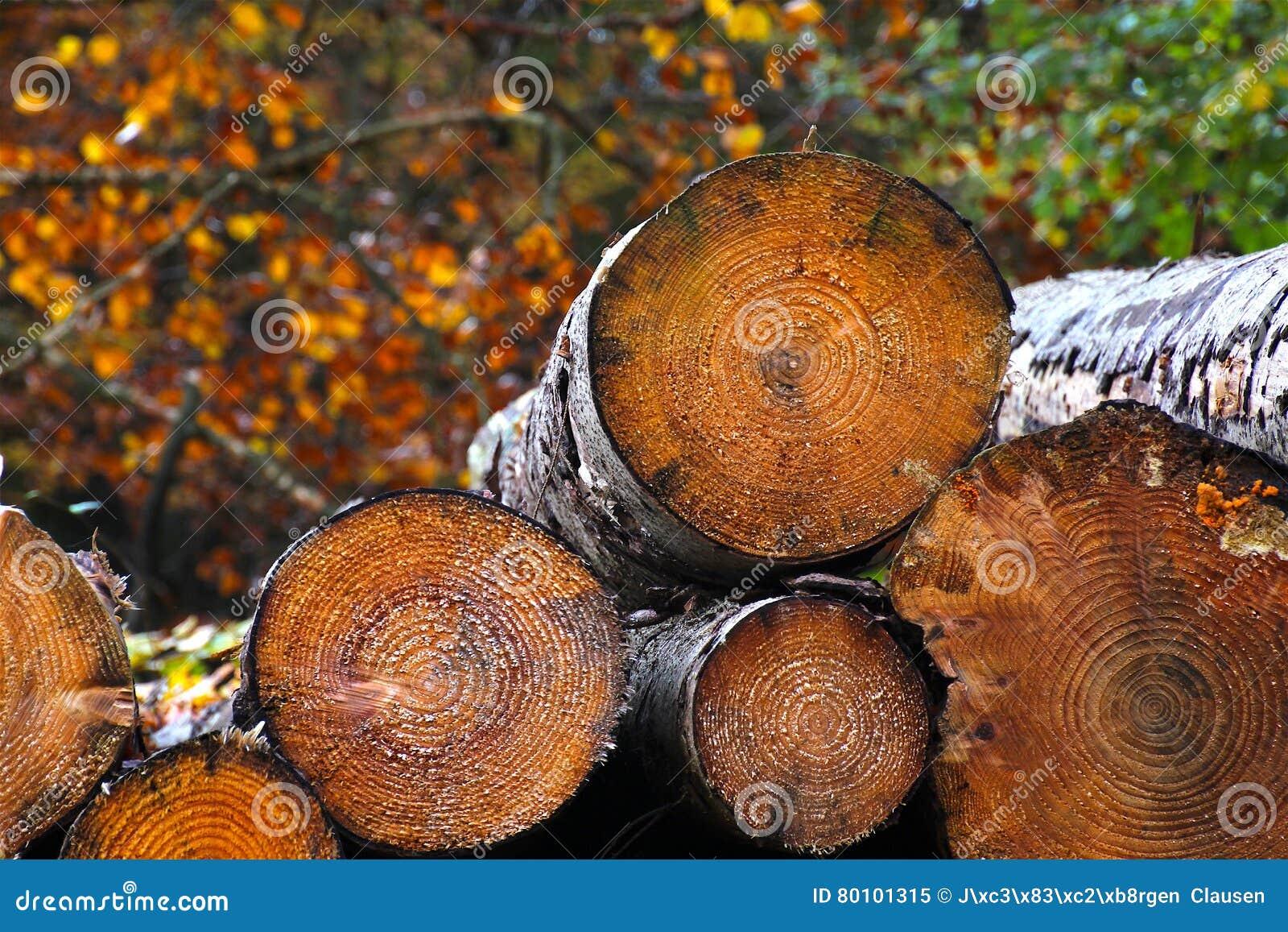 Pilha da lenha em cores do outono