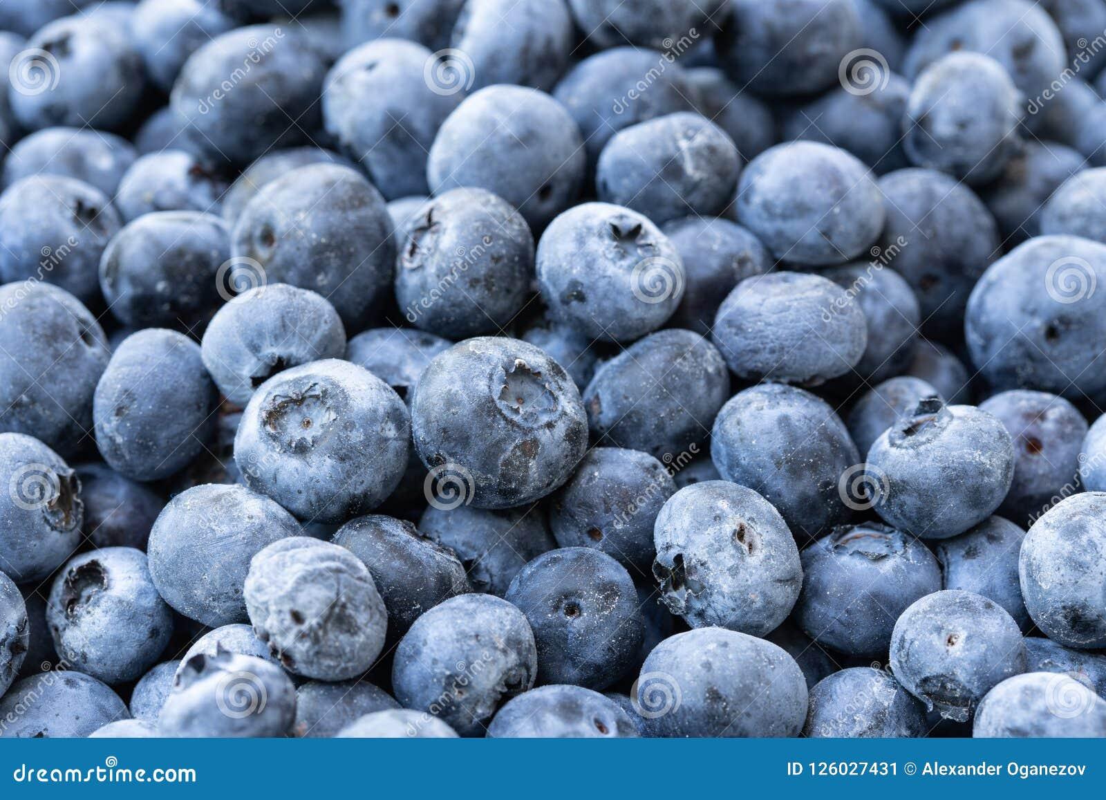 Pilha da obscuridade - mirtilos azuis