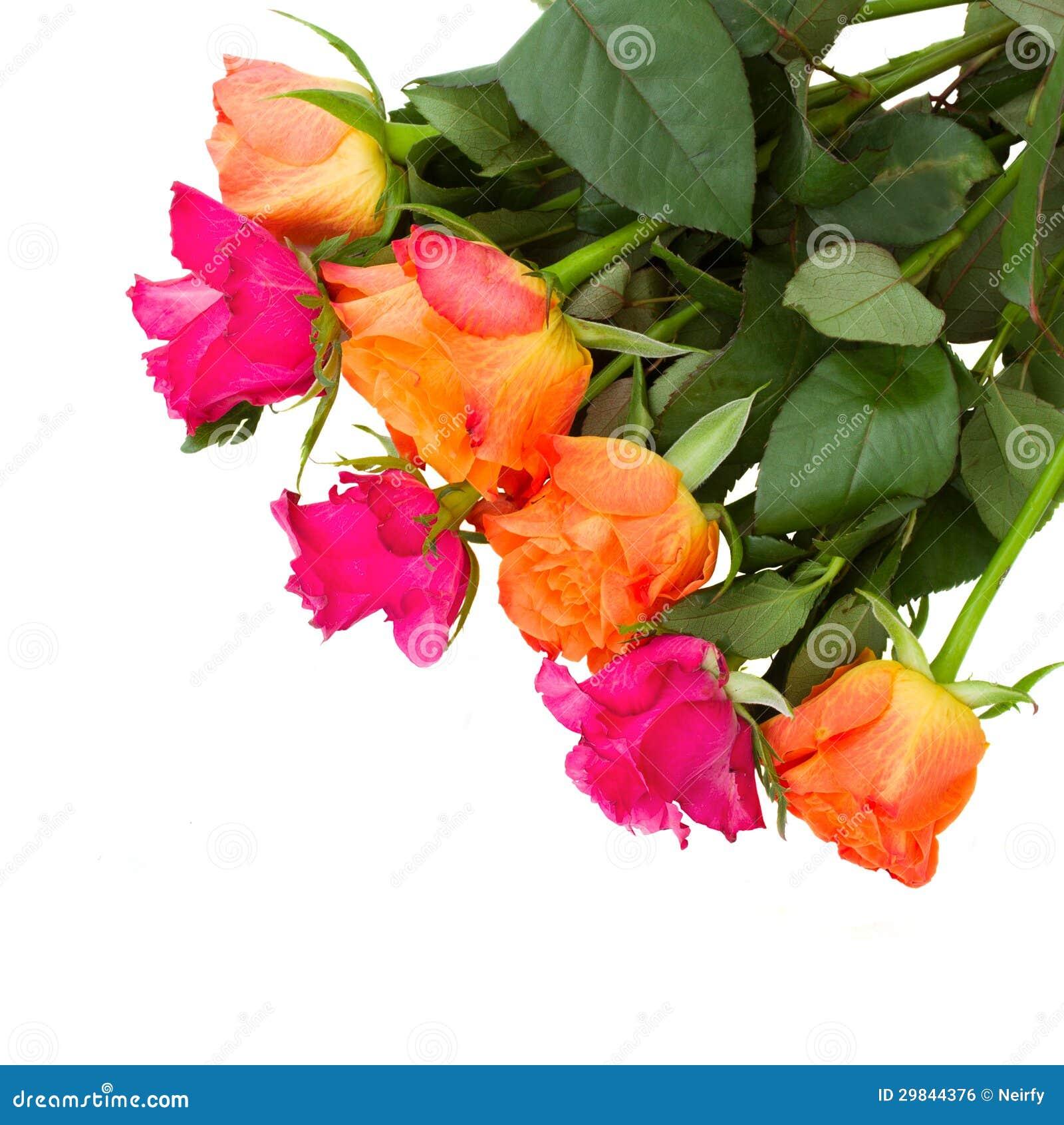 Pilha de rosas alaranjadas e cor-de-rosa