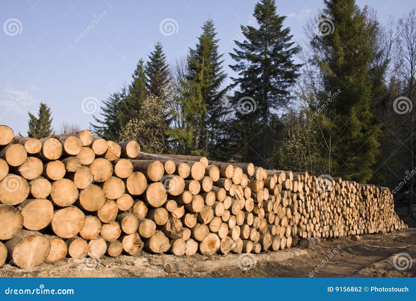 Pilha de madeira da árvore de pinho na floresta