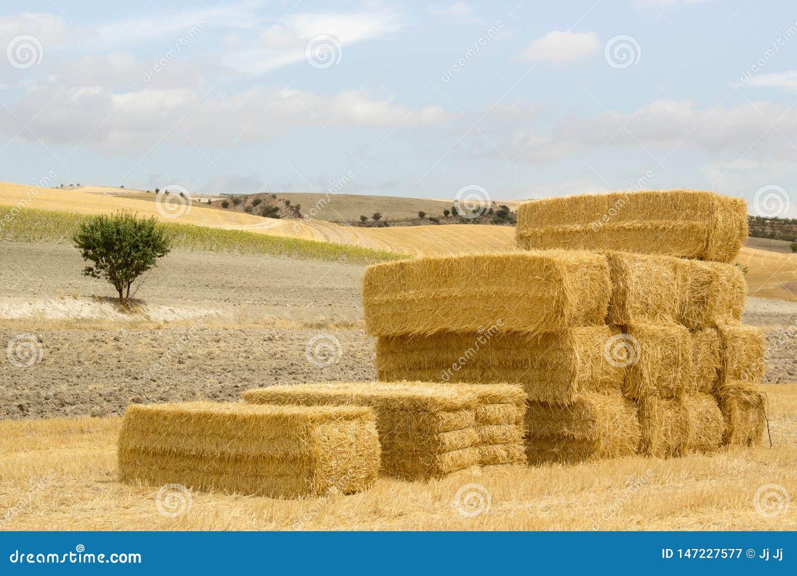 Pilha de pacotes da palha em uma paisagem ensolarada