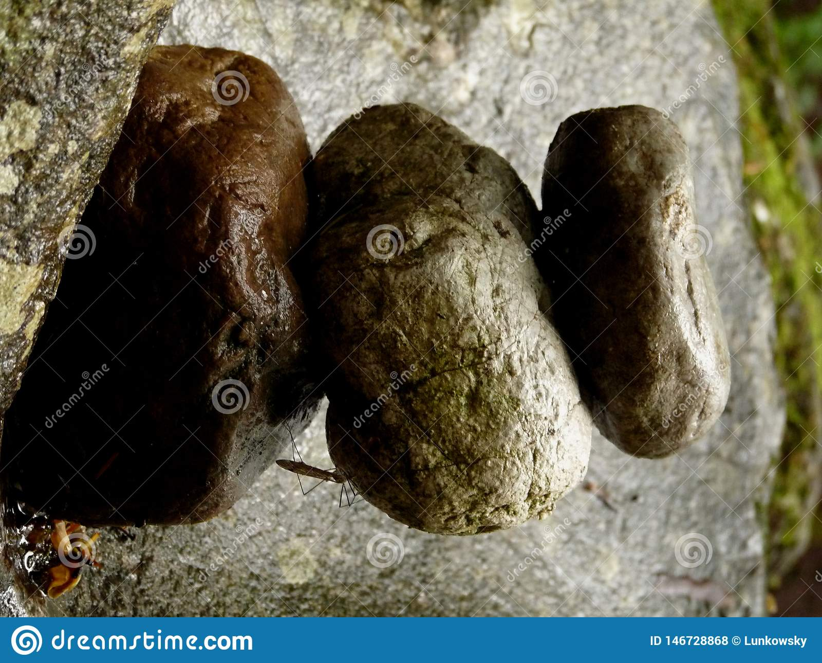 Pilha de pedras do zen na rocha no lugar mágico na floresta