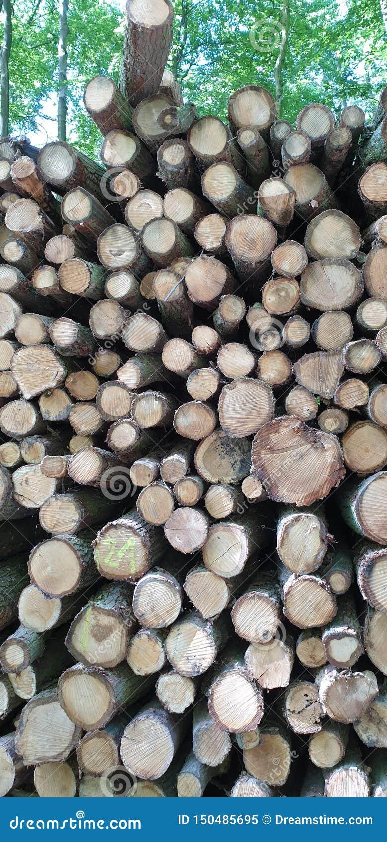 Pilha do log em uma floresta