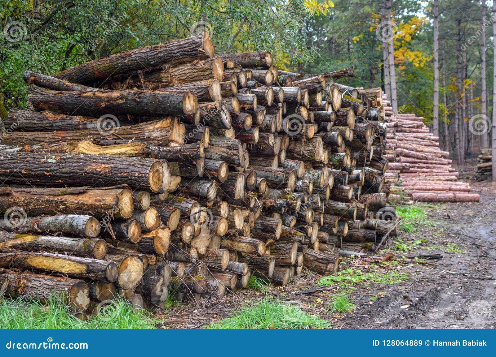 Pilha do log na floresta - empresa de registro