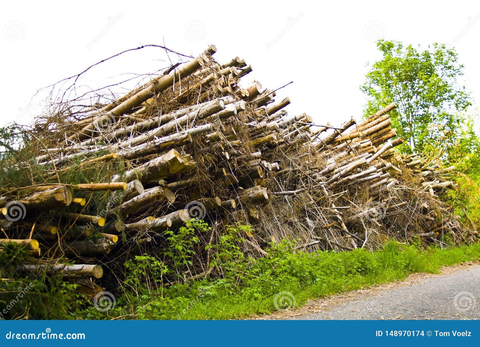 Pilhas da ?rvore pelo desflorestamento em Baviera, Alemanha