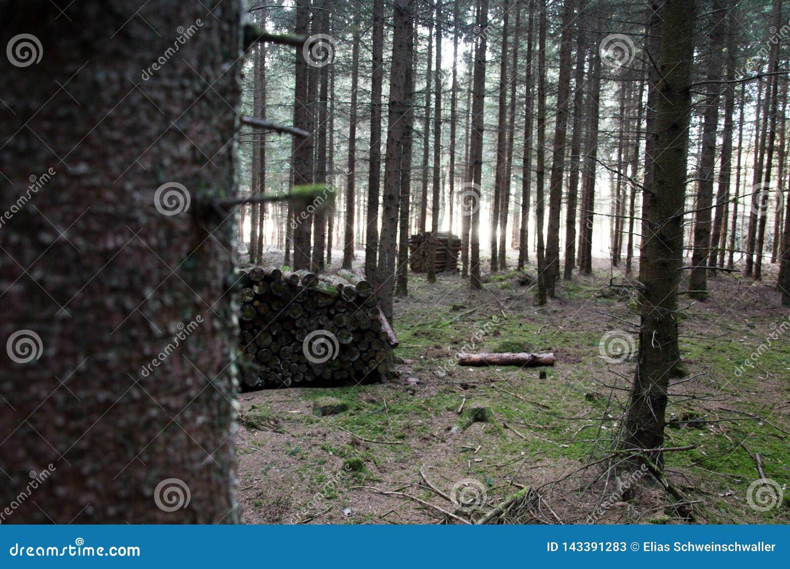 Pilhas de madeira diferentes na floresta