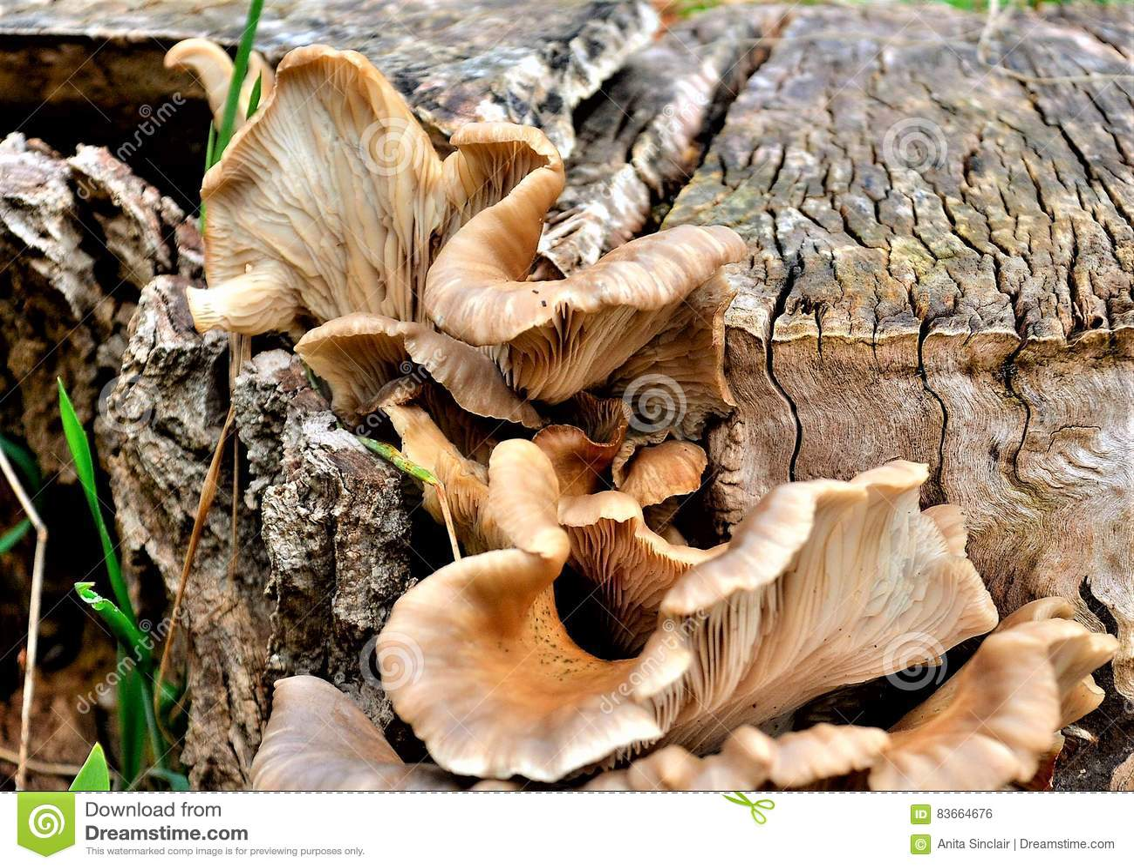 Pilzartiges Wachsen auf einem Baumstumpf