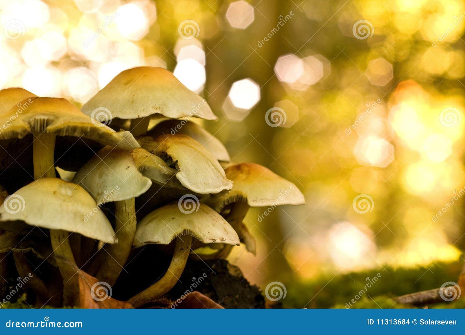 Pilze auf einem Baum-Kabel