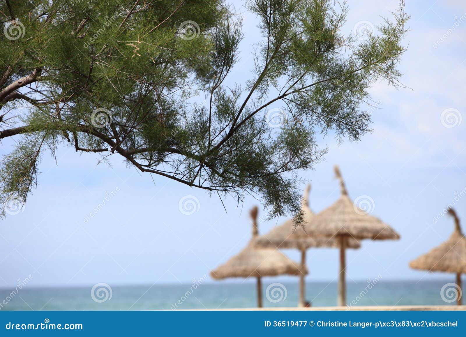 Pin avec les parapluies de plage couverts de chaume