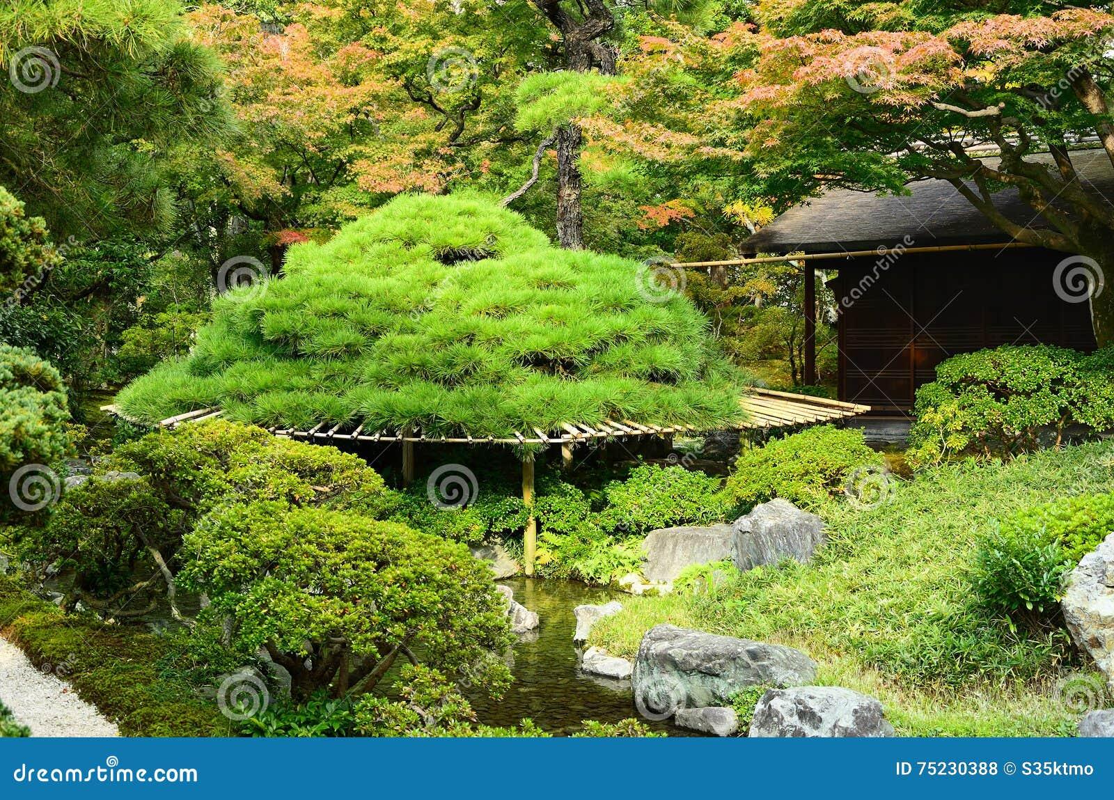Pin De Jardin Japonais Kyoto Japon Photo Stock Image Du Silence