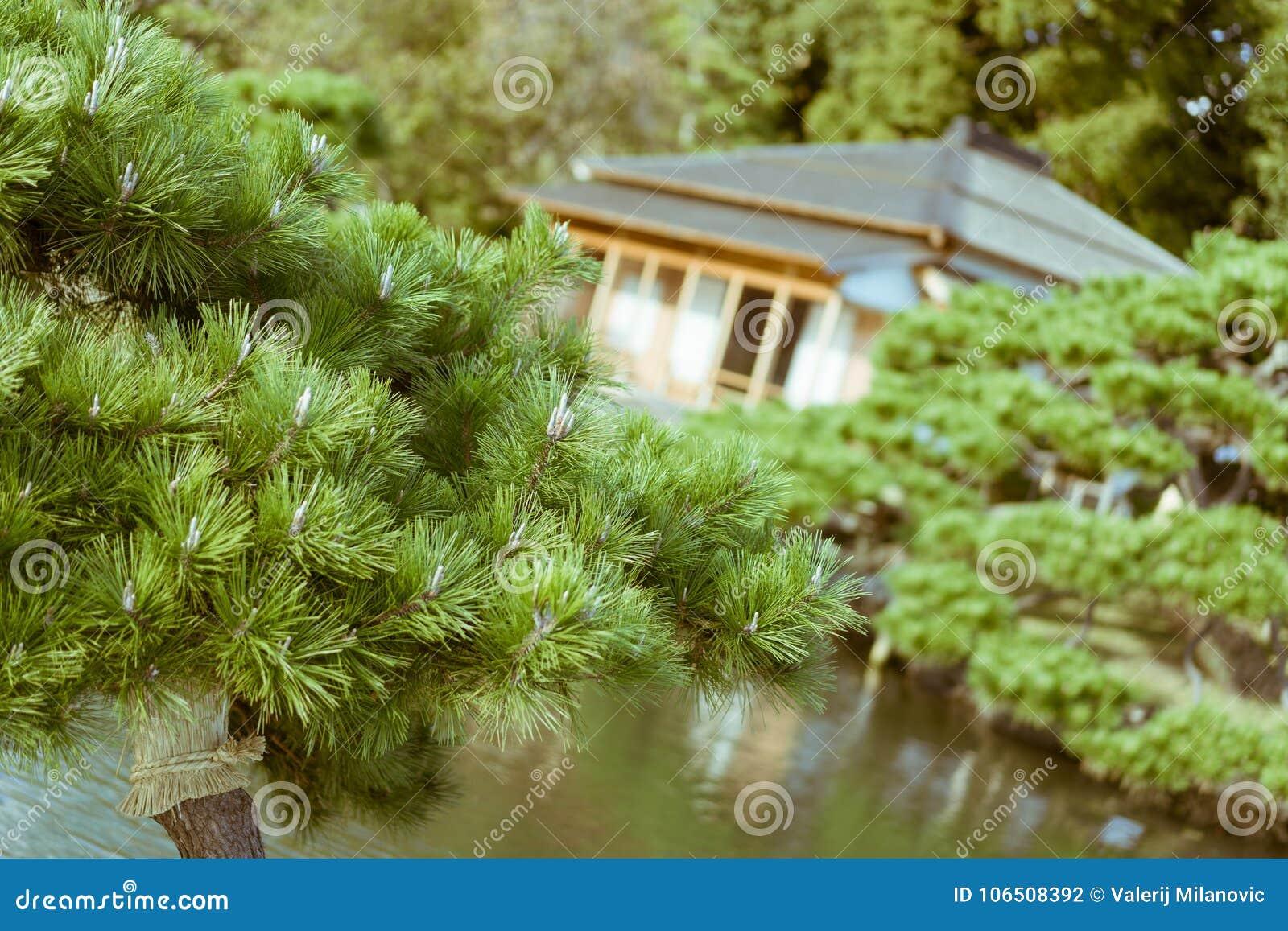 Plan Maison Traditionnelle Japonaise pin japonais avec la vieille maison de thé japonaise