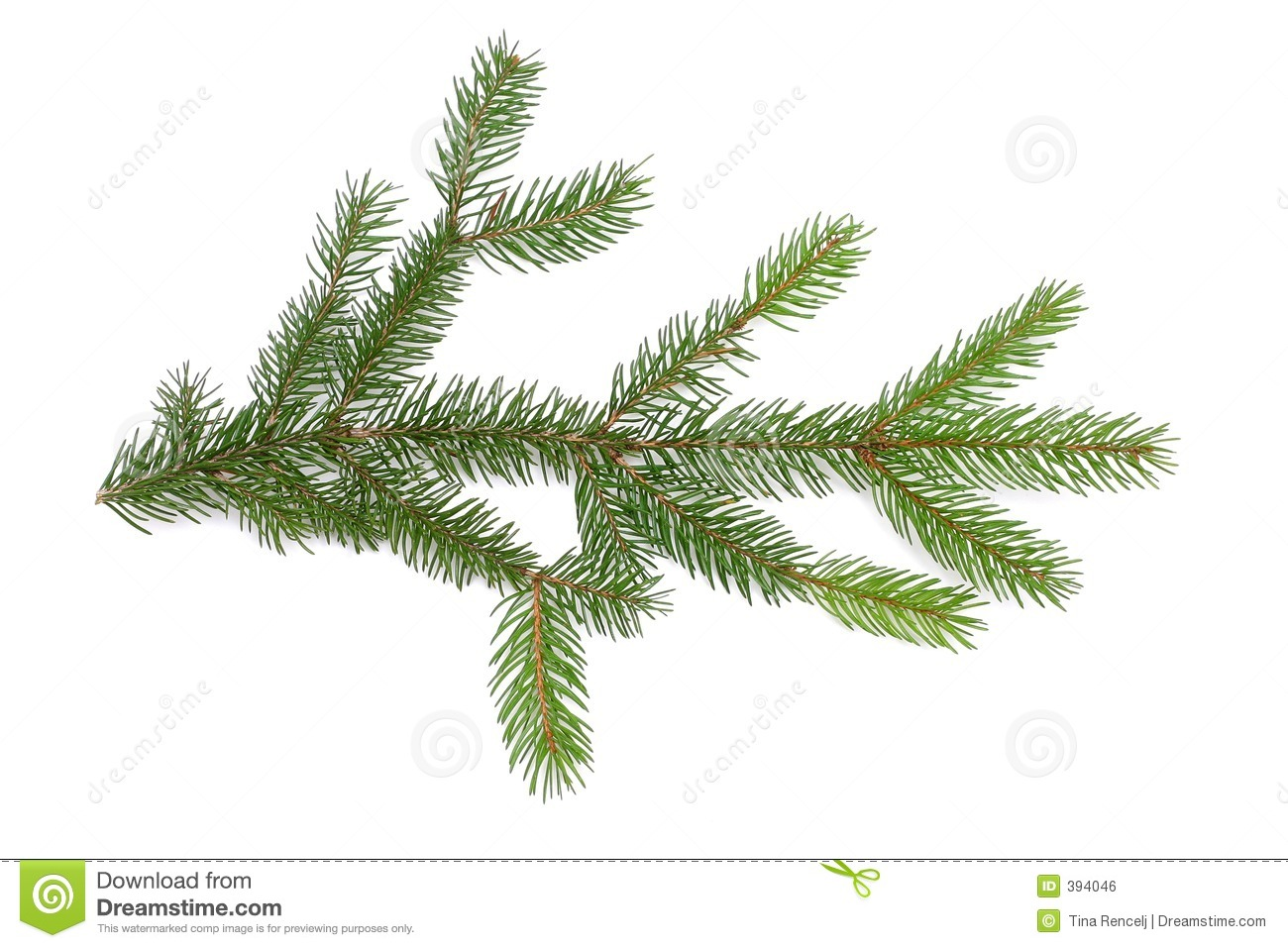 Pine Branch Royalty Free Stock Image - Image: 394046