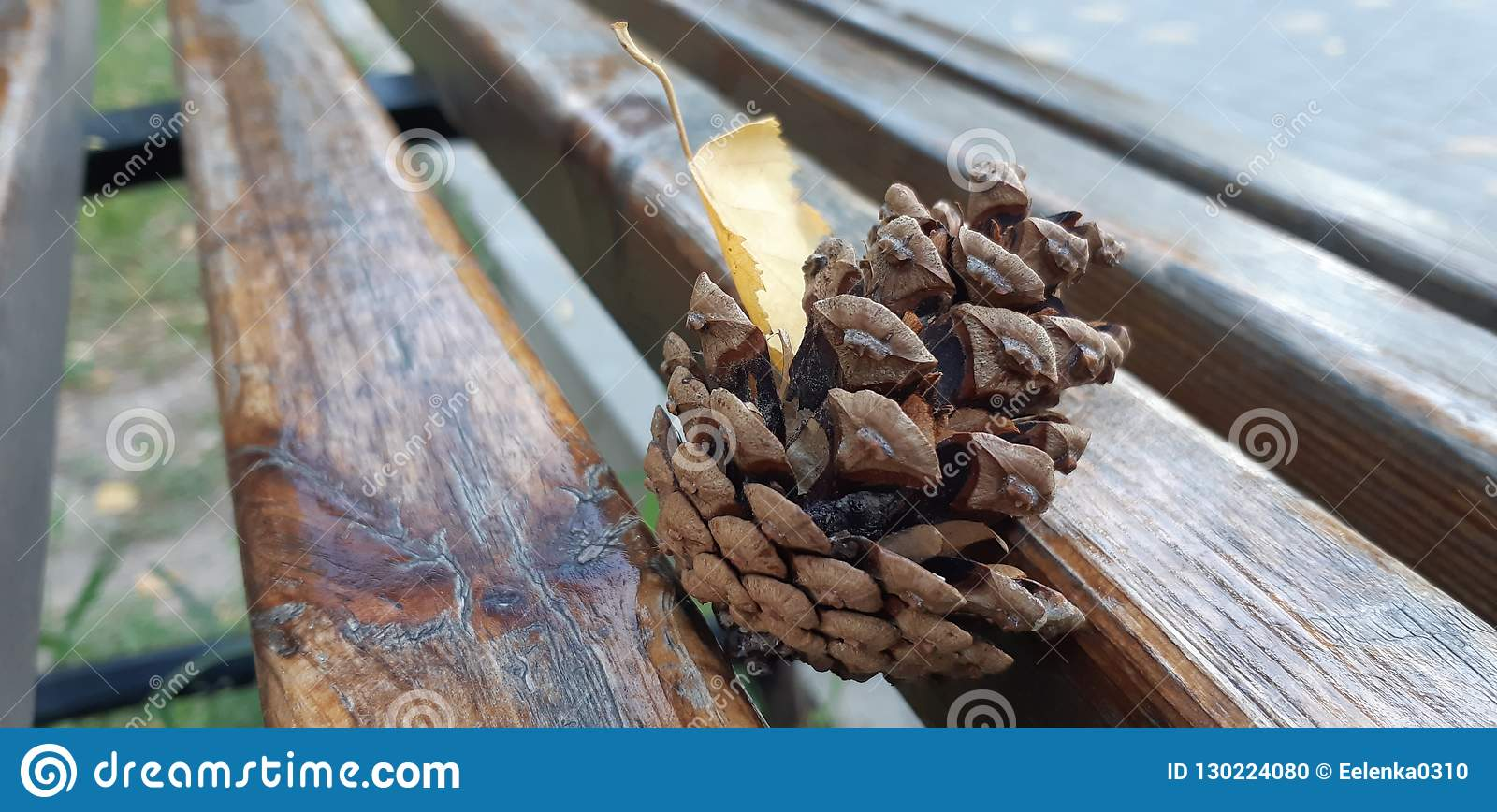 Pine Bumps Lying On A Wooden Bench Stock Photo - Image of