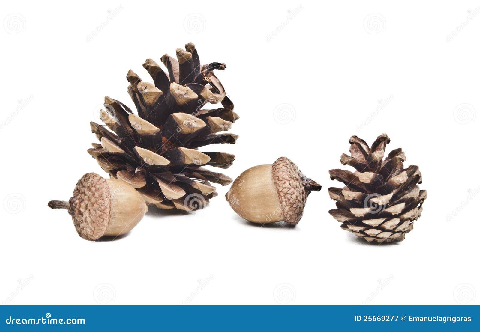 Pine cone and acorns stock illustration. Illustration of ...