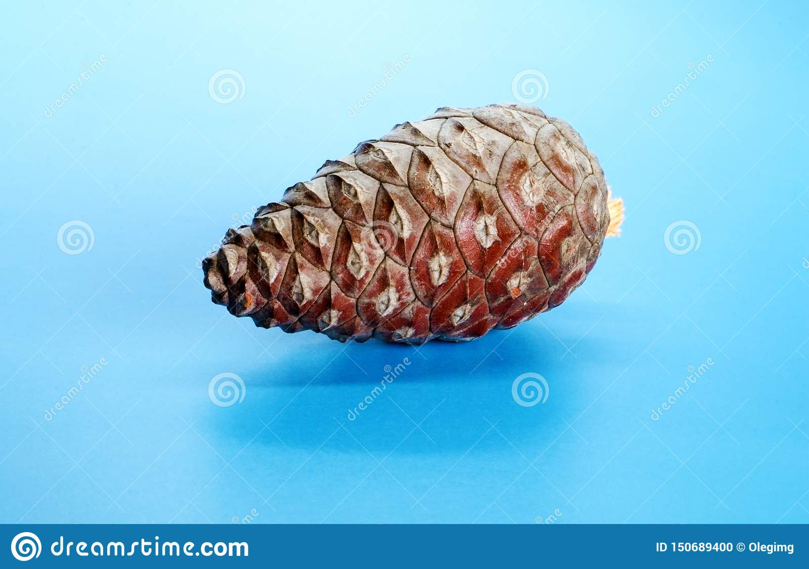 Pine cone on blue background