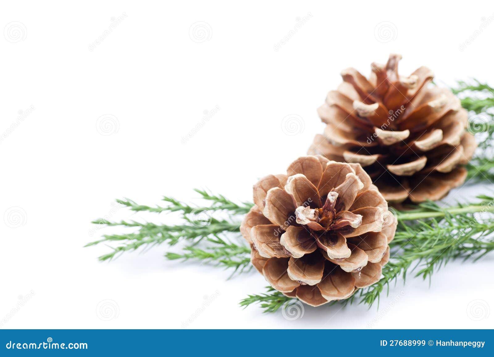 white pine cone clipart