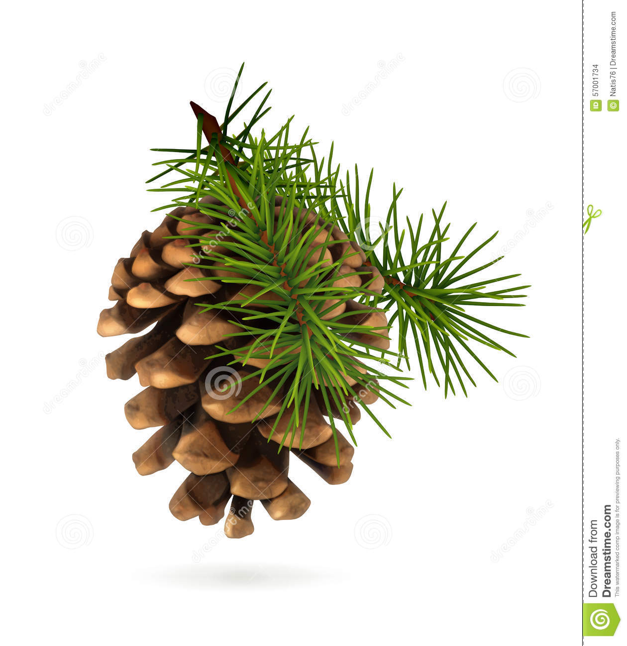 Pine Cone Illustration Pine cone with branch ...