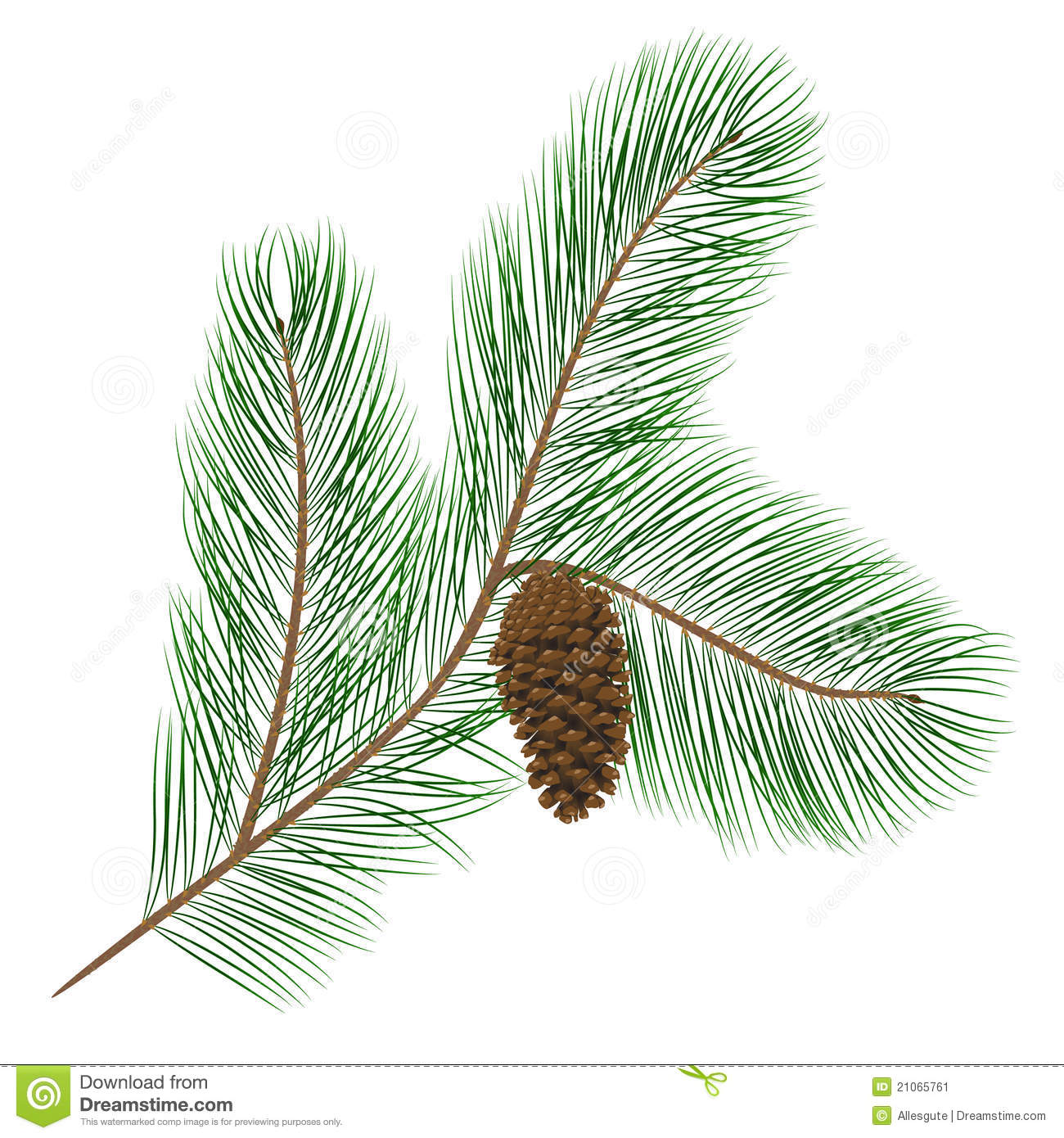 Pine Cone With Needles Stock Image Image 21065761