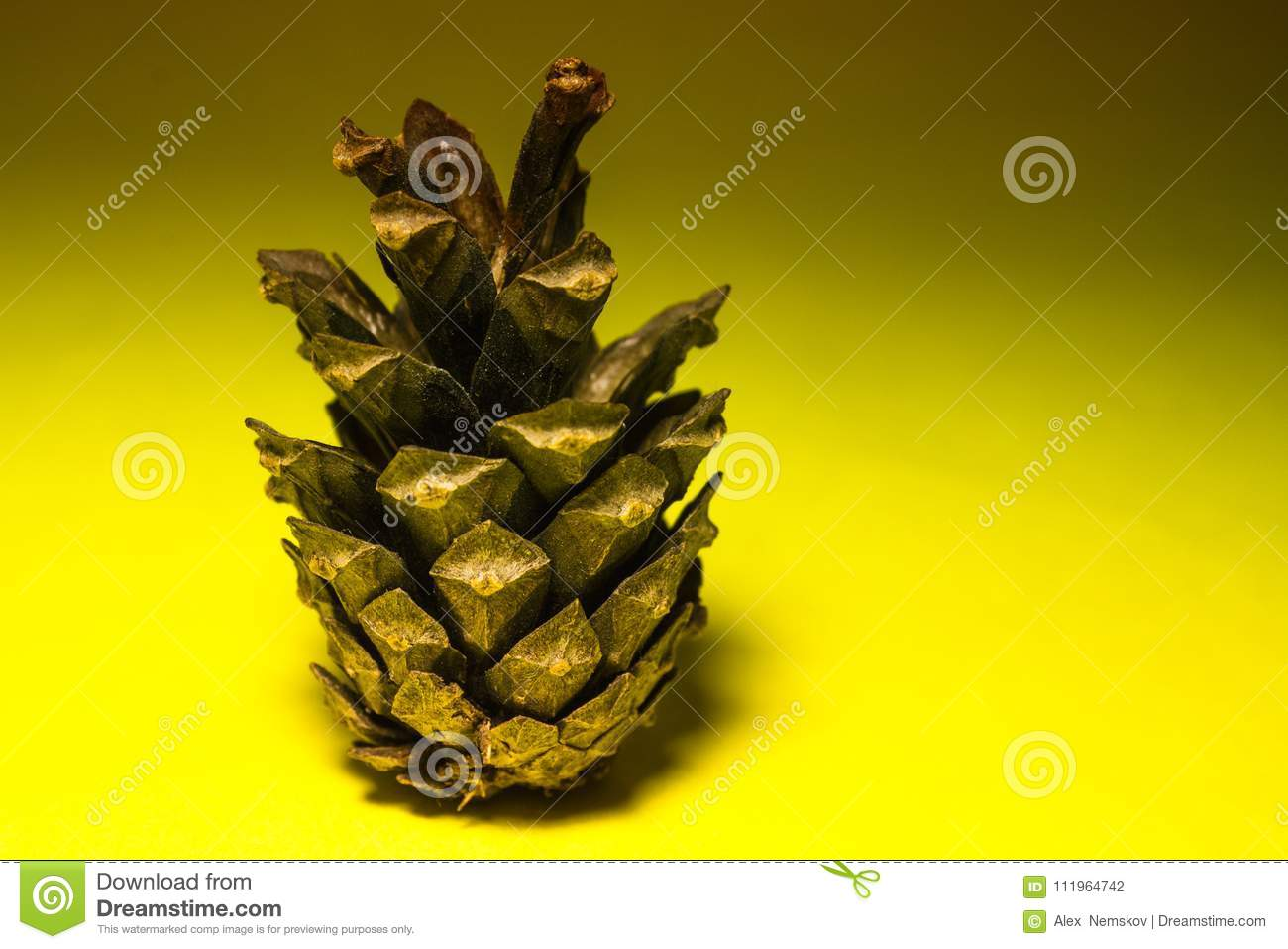 Pine cone on a yellow background