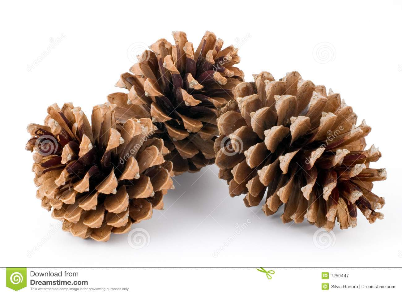 Pine Cones Royalty Free Stock Photography - Image: 7250447