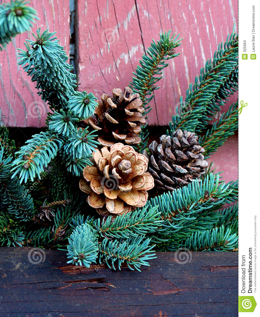 pine cones and christmas tree branch stock images image. Black Bedroom Furniture Sets. Home Design Ideas