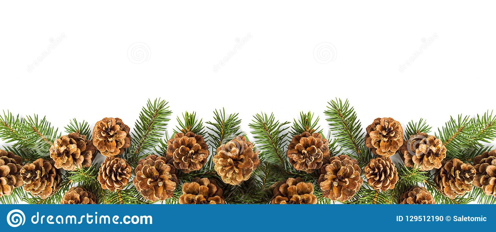 Pine cones festive background with fir branch