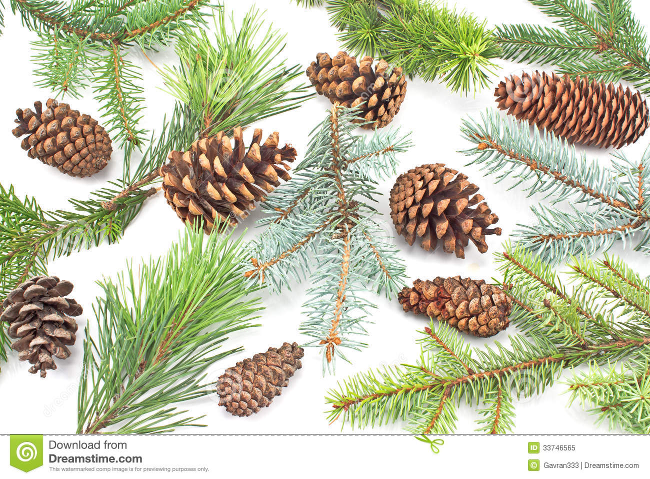 Pine cones and needles royalty free stock photo image 33746565