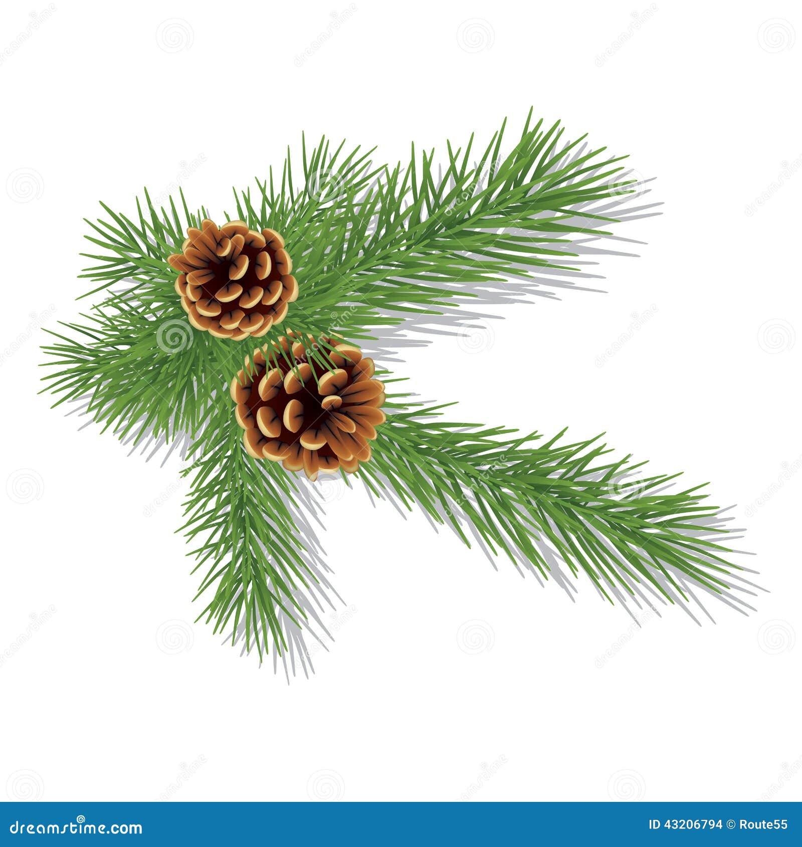 Download Pine Förgrena Sig Med Kottar Vektor Illustrationer - Illustration av natur, beröm: 43206794