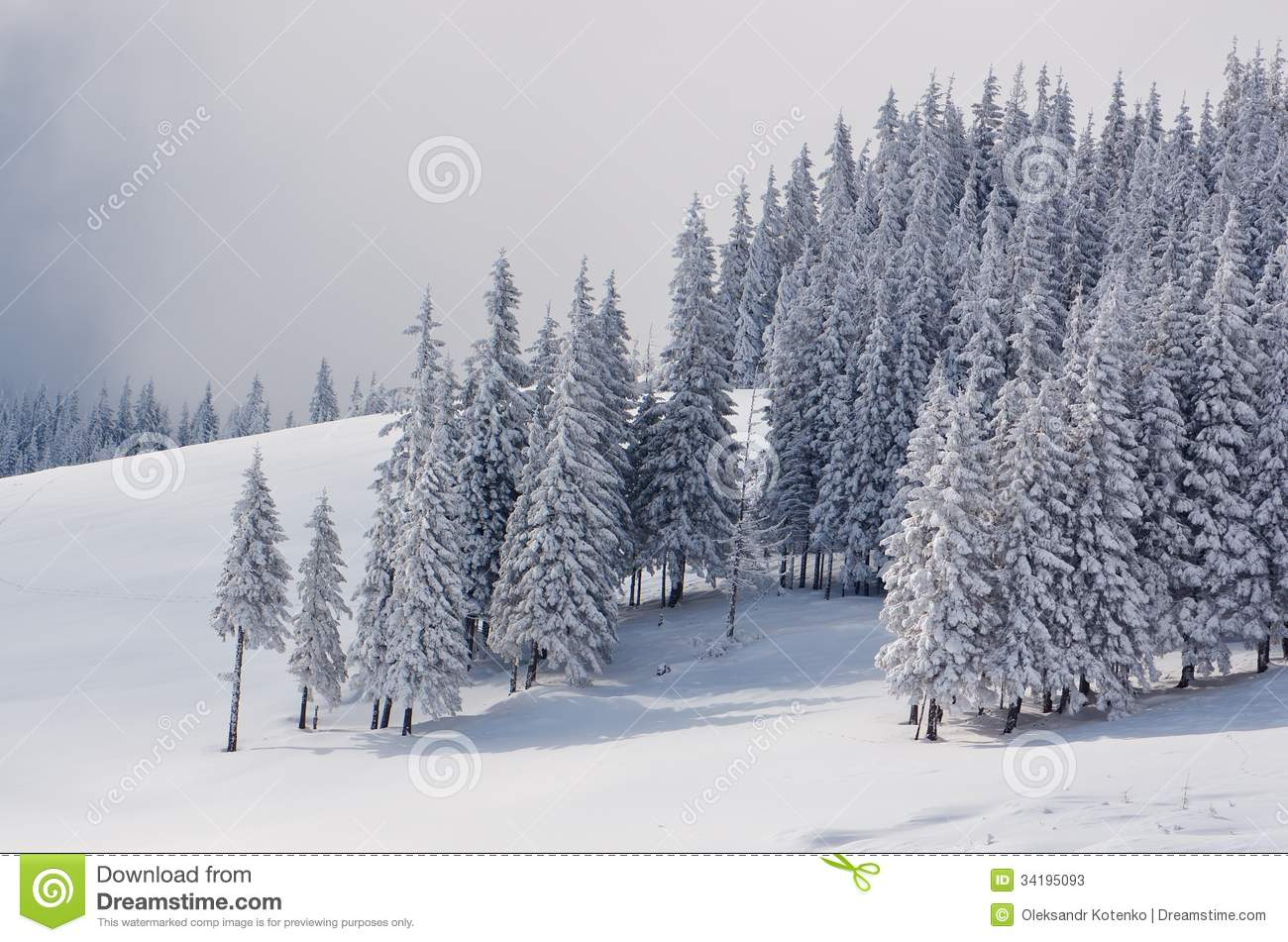 snowy fir trees forest - photo #14