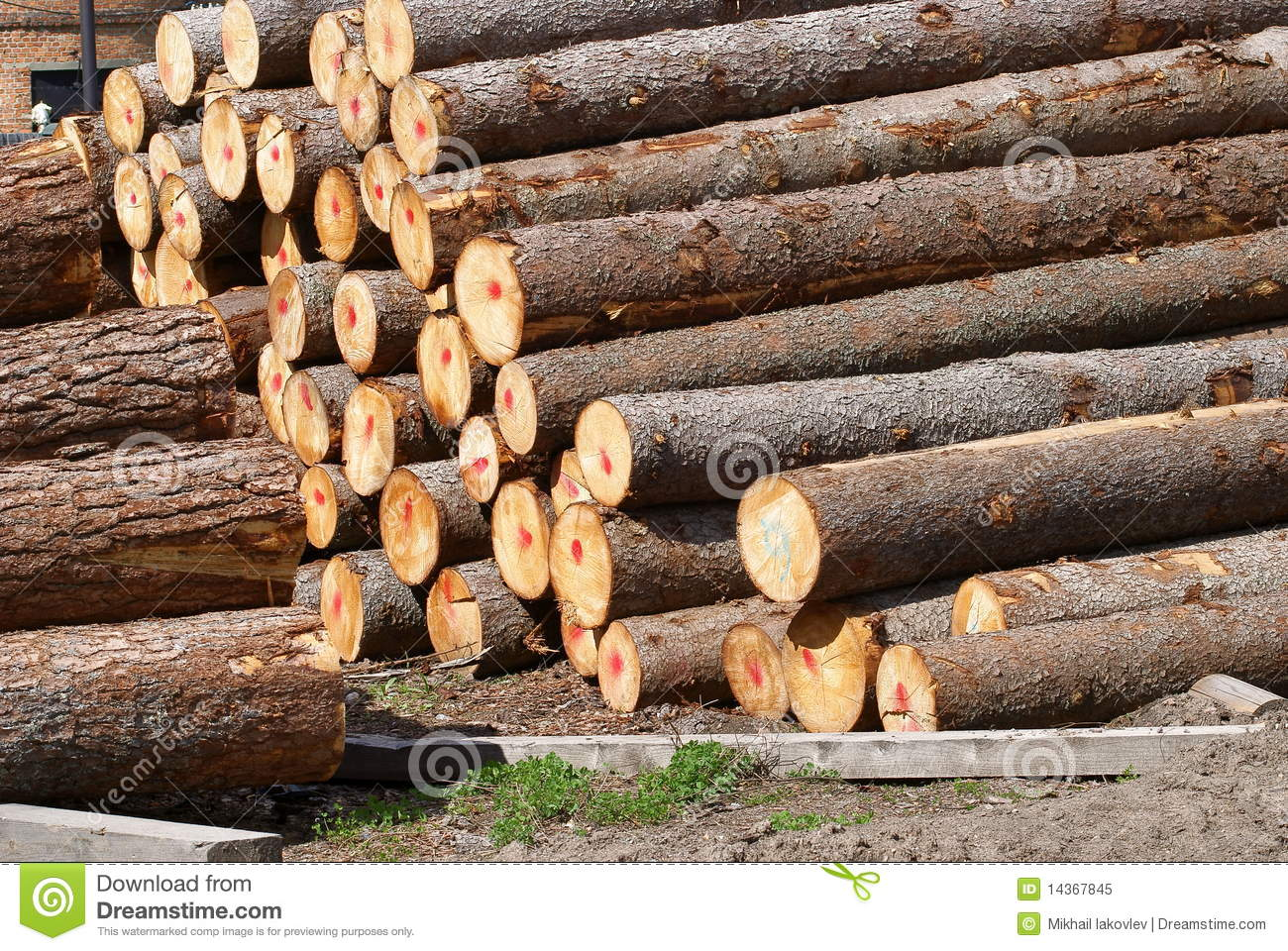 Pine and fur tree logs stock image image of destruction for Tree log