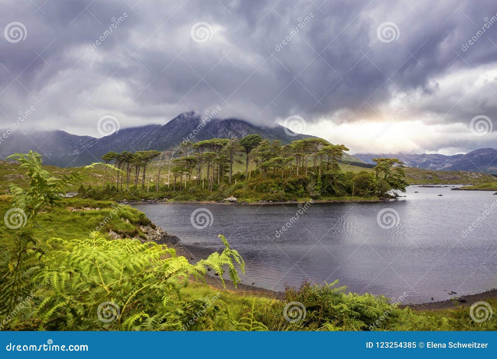 Download Pine Island, Connemara National Park Stock Image - Image of pine, summer: 123254385