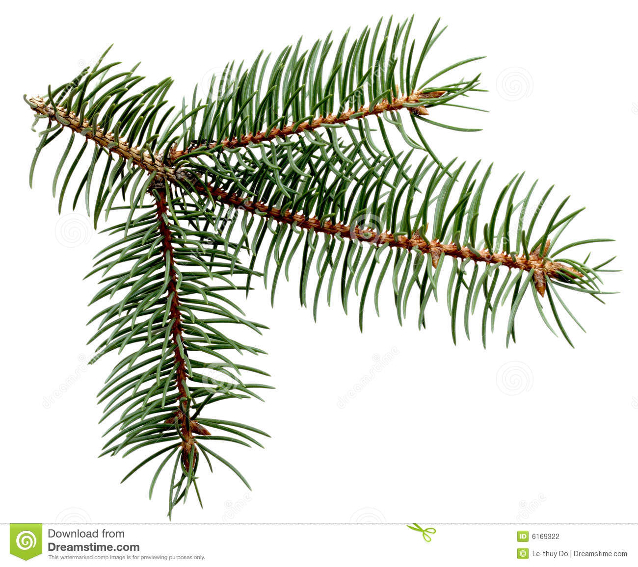 Pine Leaves Stock Photography - Image: 6169322