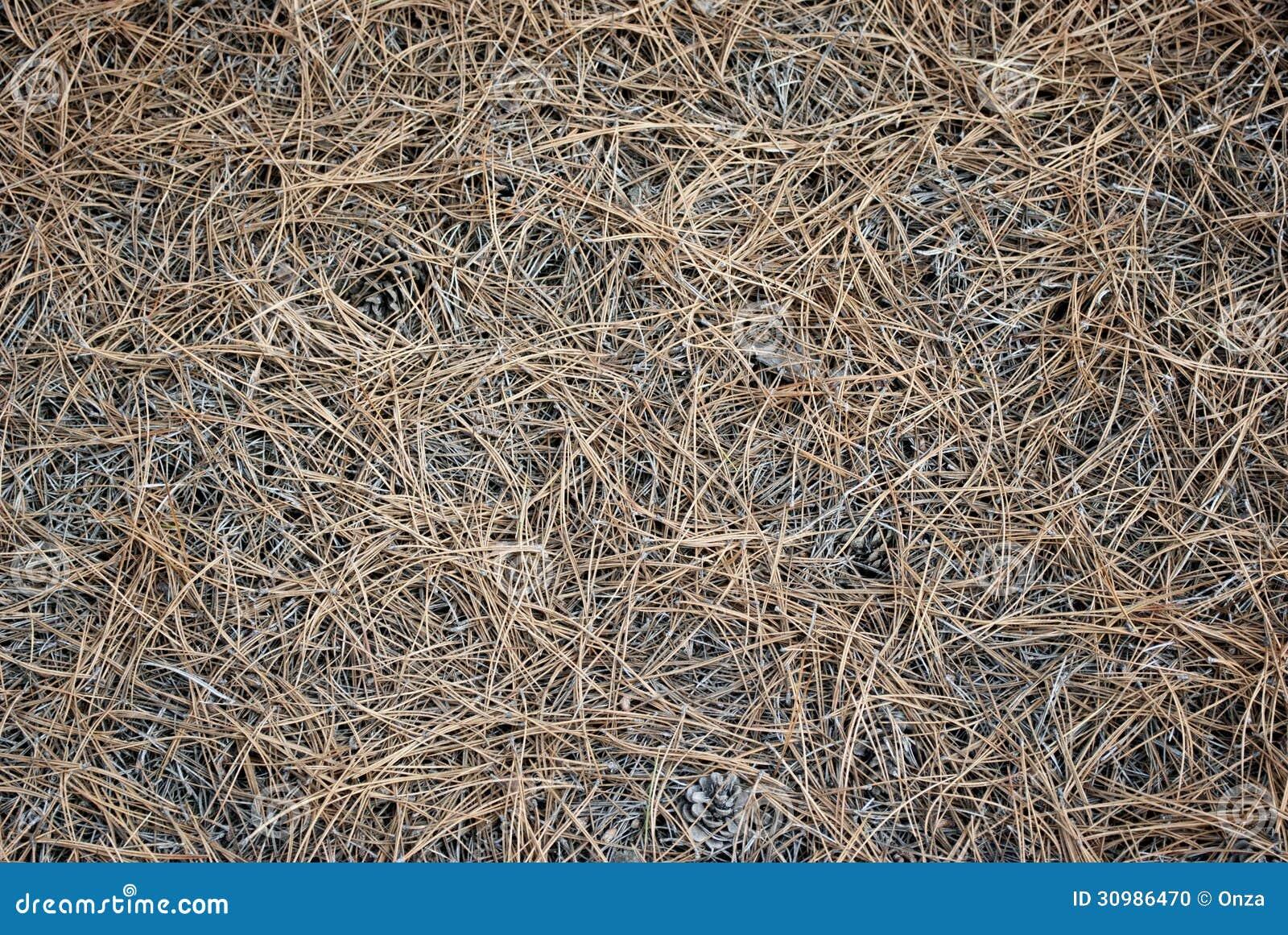 Pine Needles Background Stock Photo Image 30986470