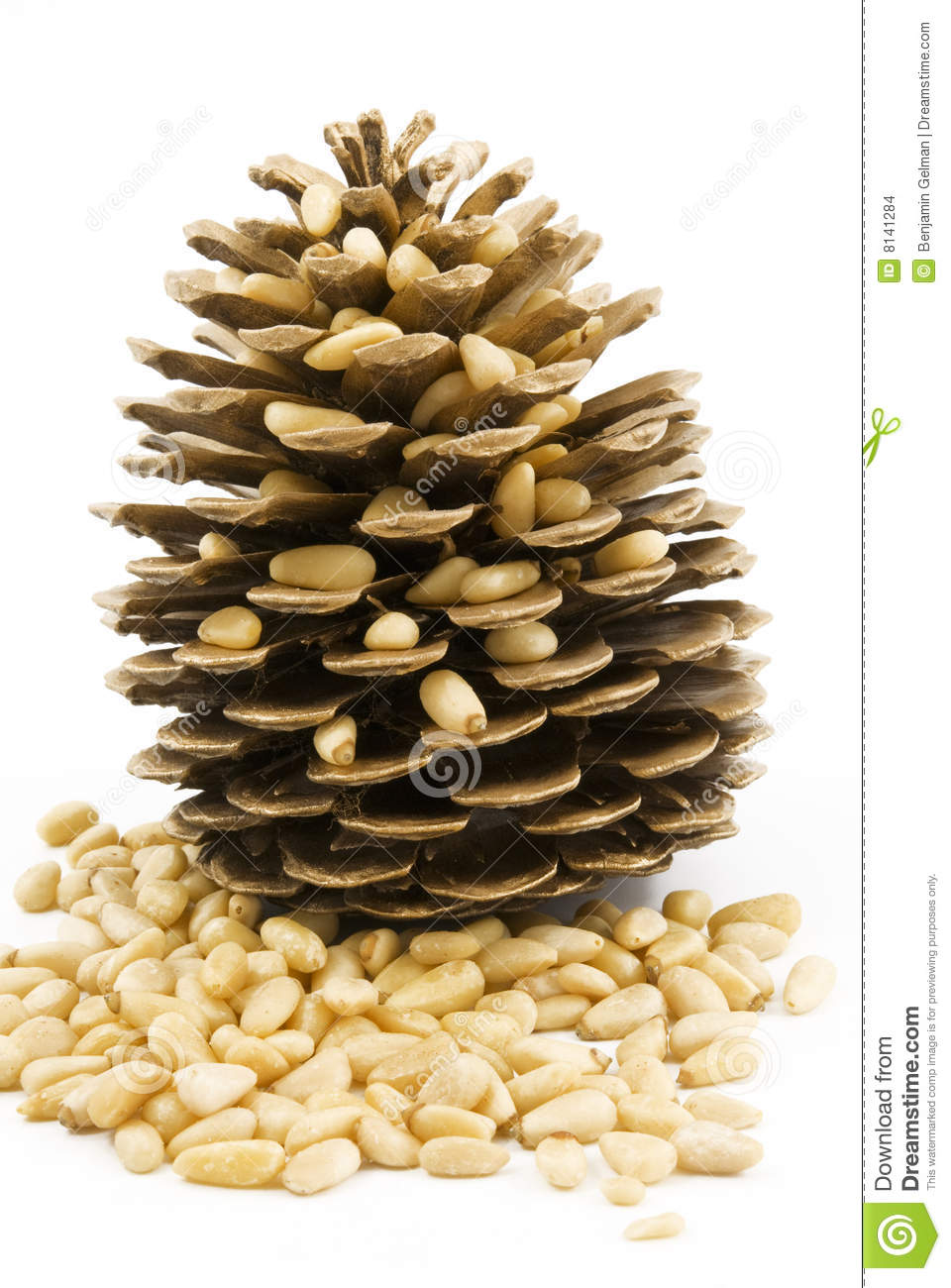 Is pine nuts a nut