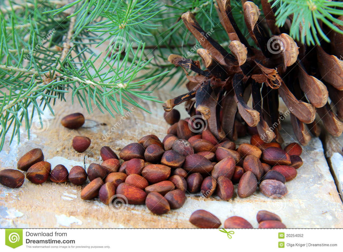 Pine nuts with cedar cones and fir tree stock photo