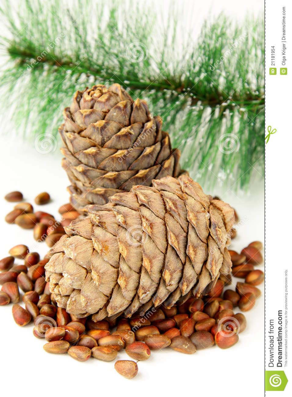 Pine nuts, with cedar cones and fir tree