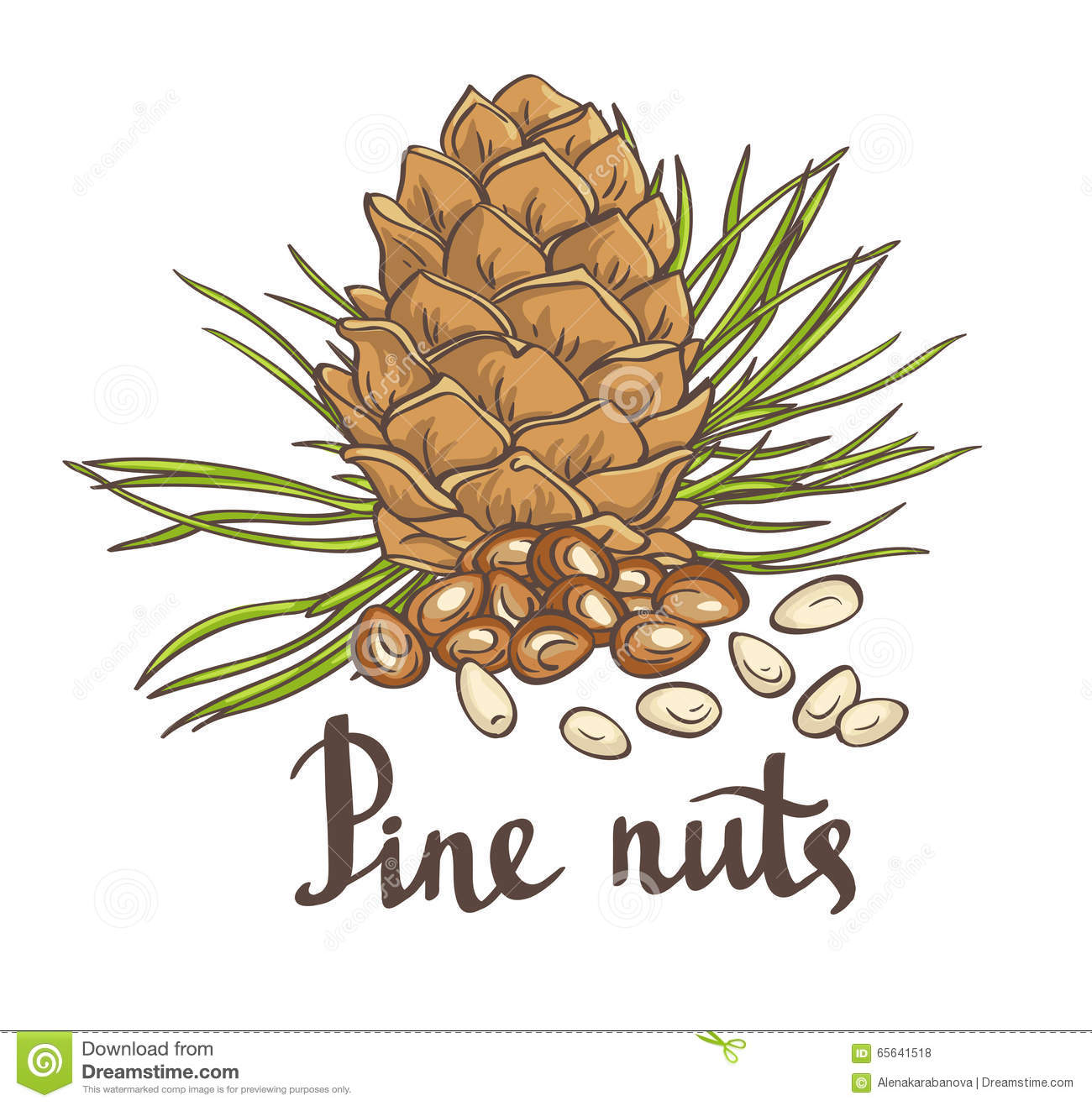 pine nuts and pine cones hand drawn vector illustration