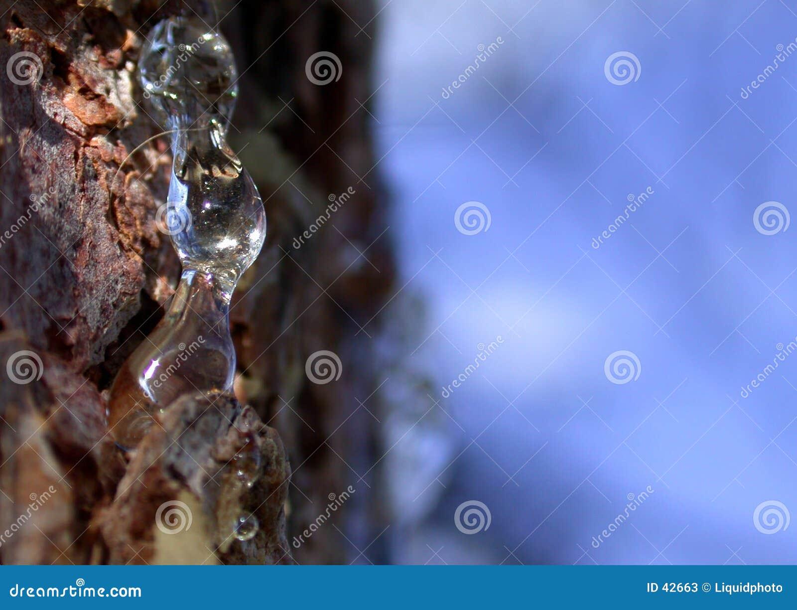 Pine Sap Pitch Resin 1
