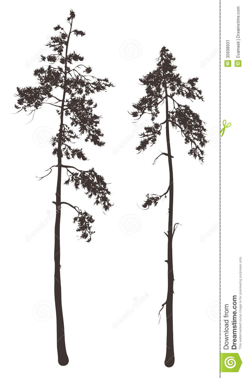 Tree outline likewise Agave Bloom besides Drawing Dry Tree Sketch Illustration moreover Stock Illustration Bilberry Coloring Book Sketch Black White Illustration Monochrome Branch Blueberry Leaves Berries Forest Painted Berry Image77598633 additionally Wide Birch Trees Wall Decal. on art forest