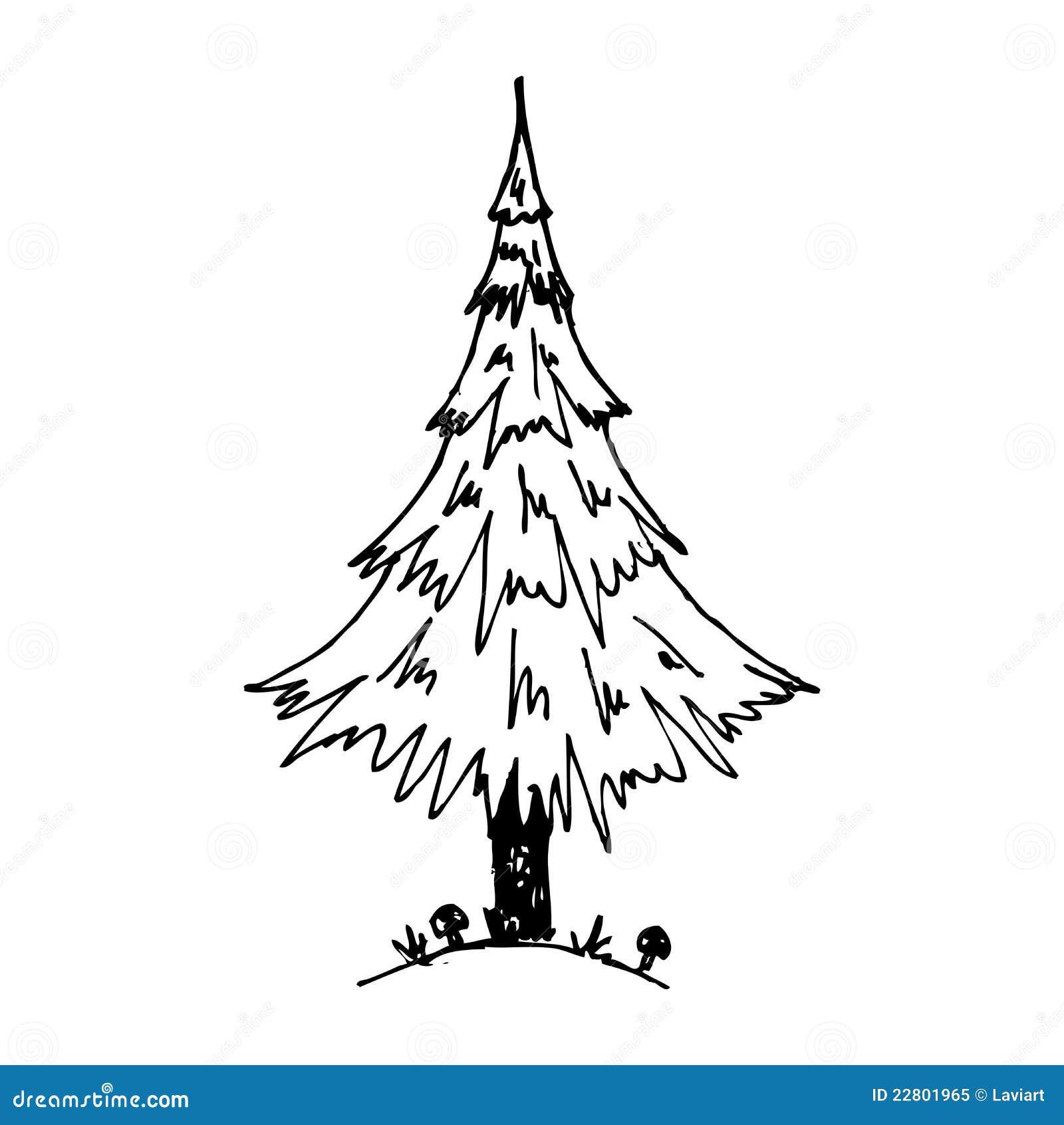 Uncategorized Pine Tree Sketch pine tree royalty free stock photo image 22801965 download tree