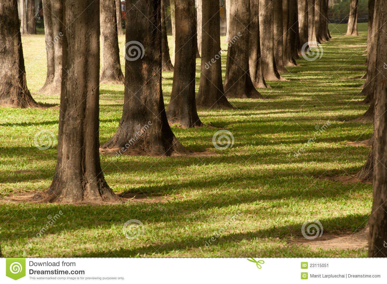 A pine tree garden . stock image. Image of stick, backcloth - 23115051
