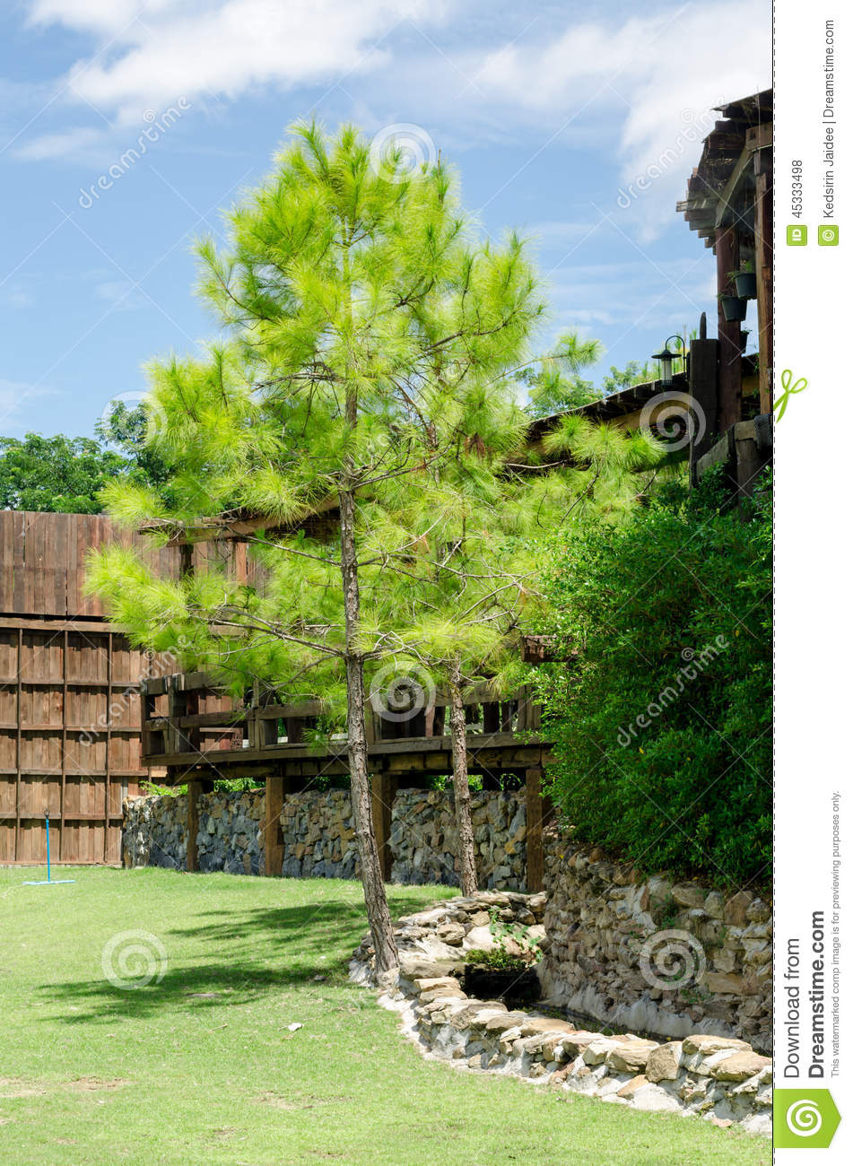 Royalty Free Stock Photo. Download Pine Tree And Garden ...