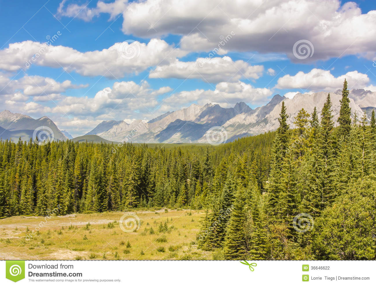 Pine Tree Mountain Valley Stock Photography - Image: 36646622
