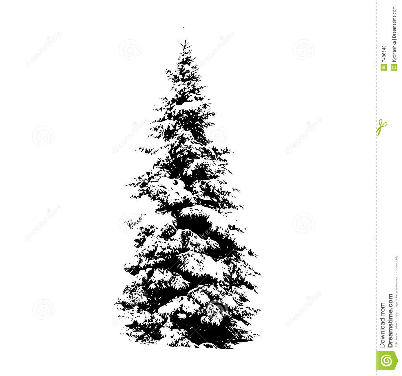 Pine tree, vector illustration