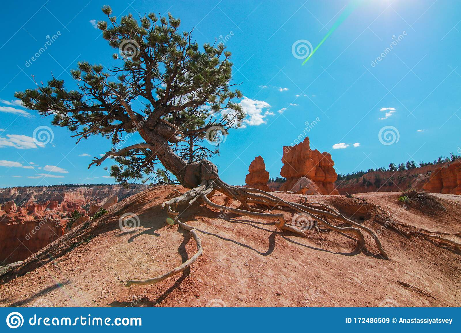 Pine Trees In Bryce Canyon National Park, Utah, USA Stock ...