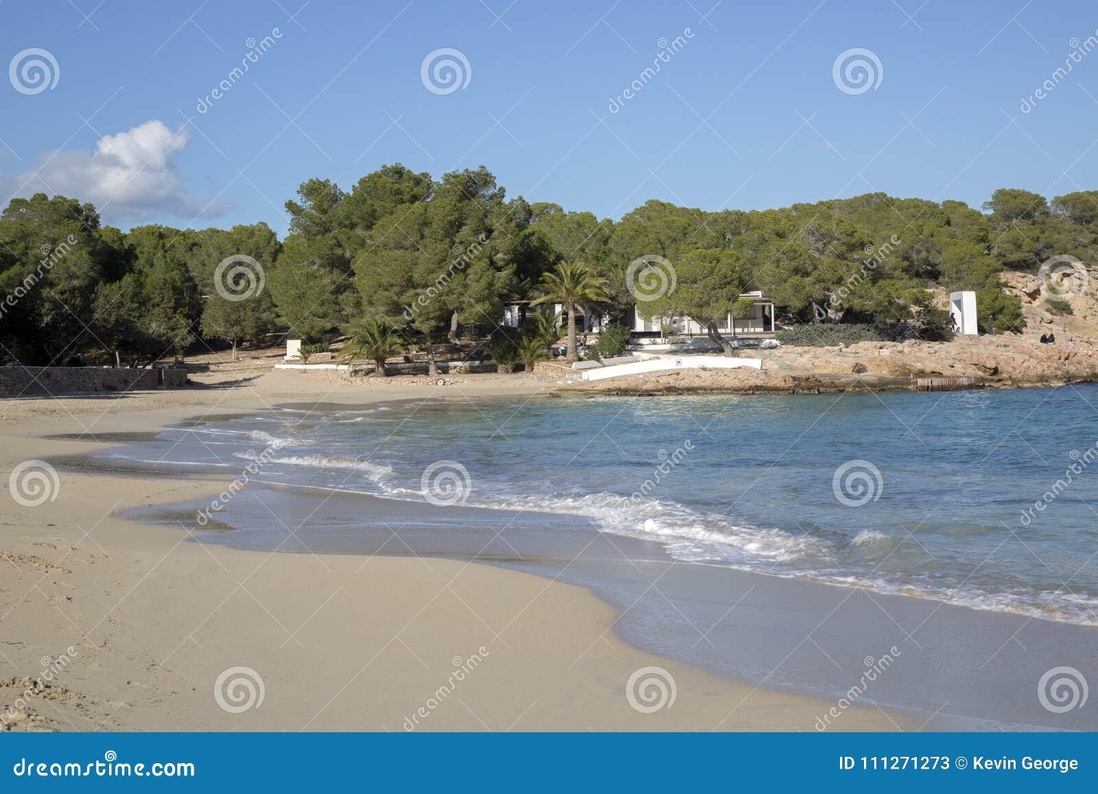Pine Trees At Cala Bassa Cove Beach